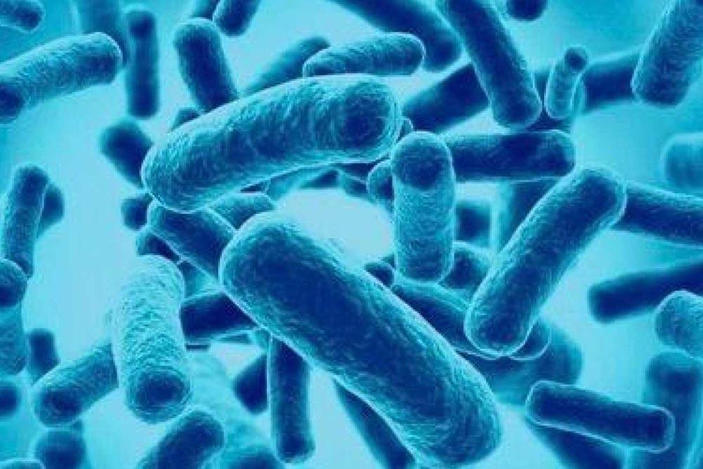 Microbiota intestinal